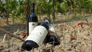 Regali Aziendali| Vini Toscana Chianti