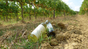 Regali Aziendali| Vini Toscana Vernaccia di San Gimignano